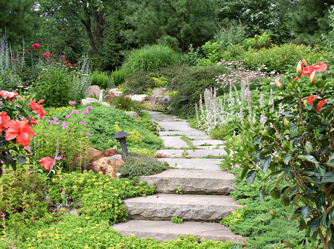 Garden & Design - Pruning and Trimming, Weeding, Garden Design and Construction, Bed Renewal at Scarlet Oak.